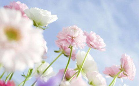 春天的生日祝福语
