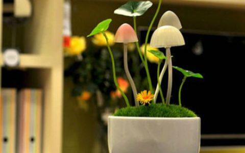 阿凡达蘑菇盆栽浪漫小夜灯